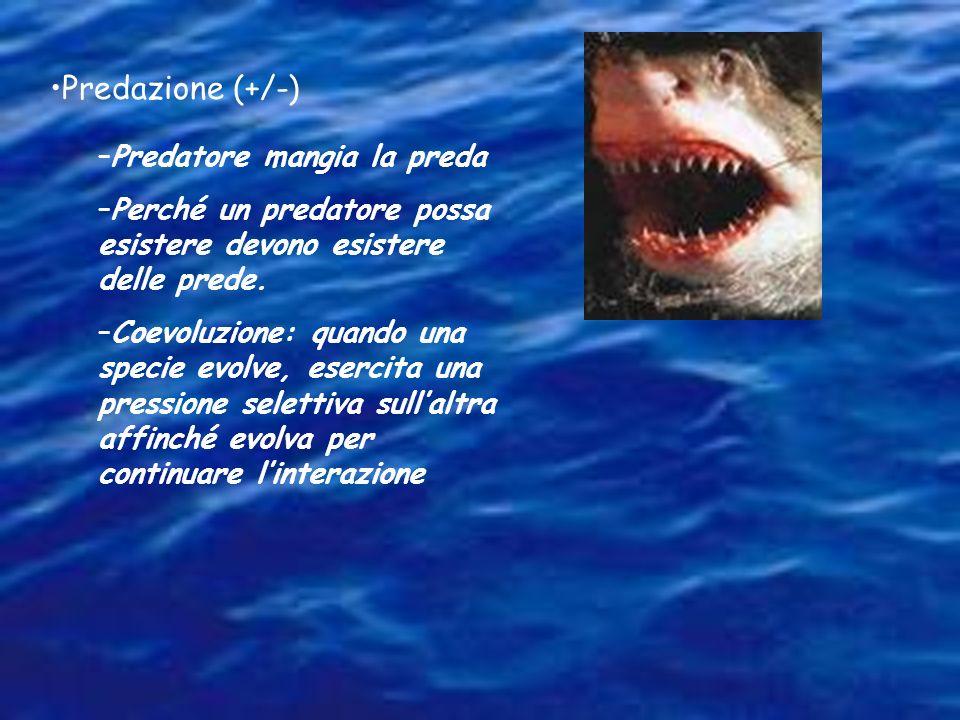 Predazione (+/-) –Predatore mangia la preda –Perché un predatore possa esistere devono esistere delle prede. –Coevoluzione: quando una specie evolve,