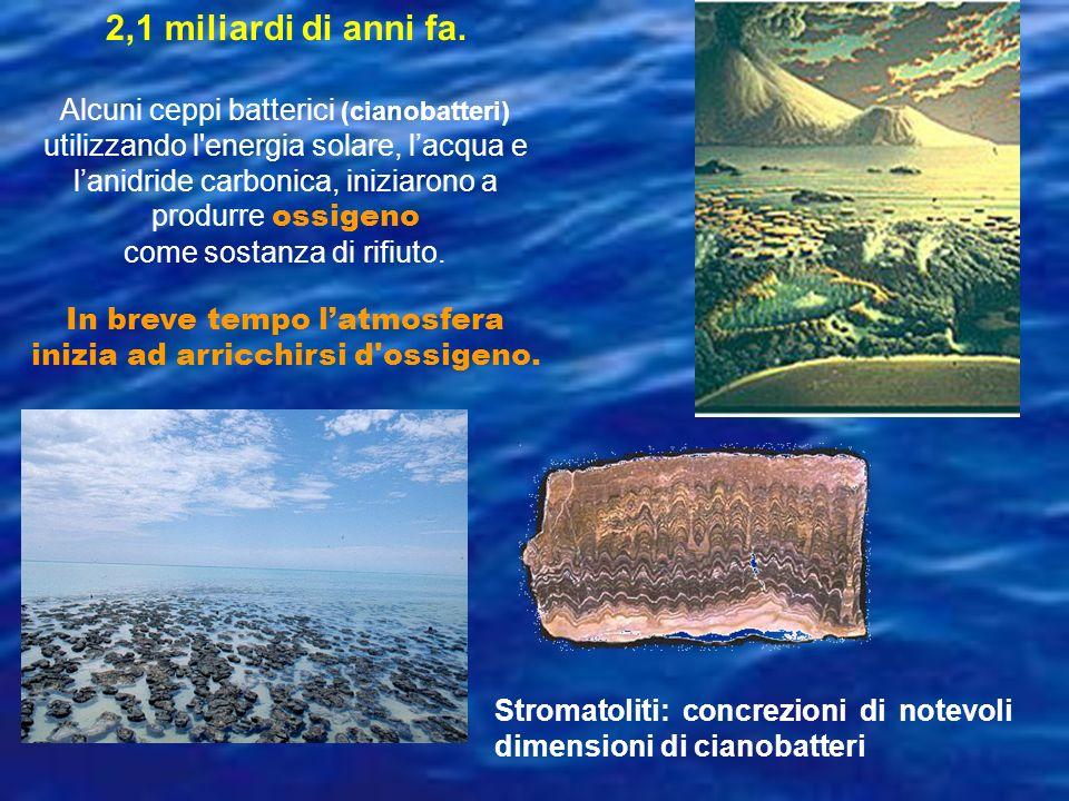 2,1 miliardi di anni fa. Alcuni ceppi batterici (cianobatteri) utilizzando l'energia solare, lacqua e lanidride carbonica, iniziarono a produrre ossig