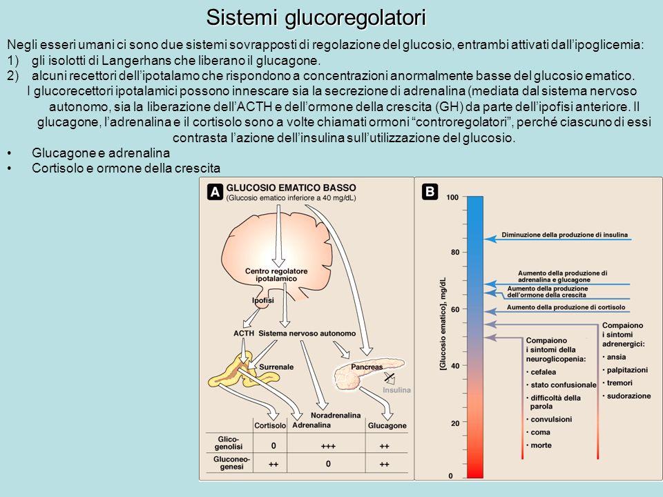 Sistemi glucoregolatori Negli esseri umani ci sono due sistemi sovrapposti di regolazione del glucosio, entrambi attivati dallipoglicemia: 1)gli isolo