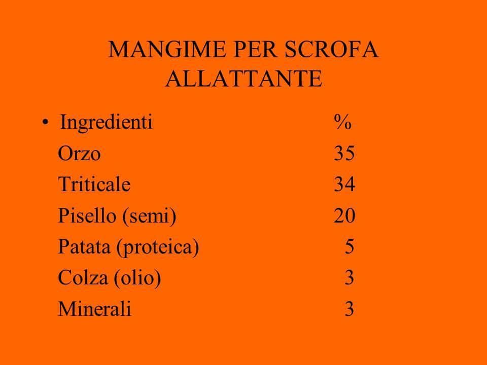 MANGIME PER SCROFA ALLATTANTE Ingredienti% Orzo35 Triticale34 Pisello (semi) 20 Patata (proteica) 5 Colza (olio) 3 Minerali 3