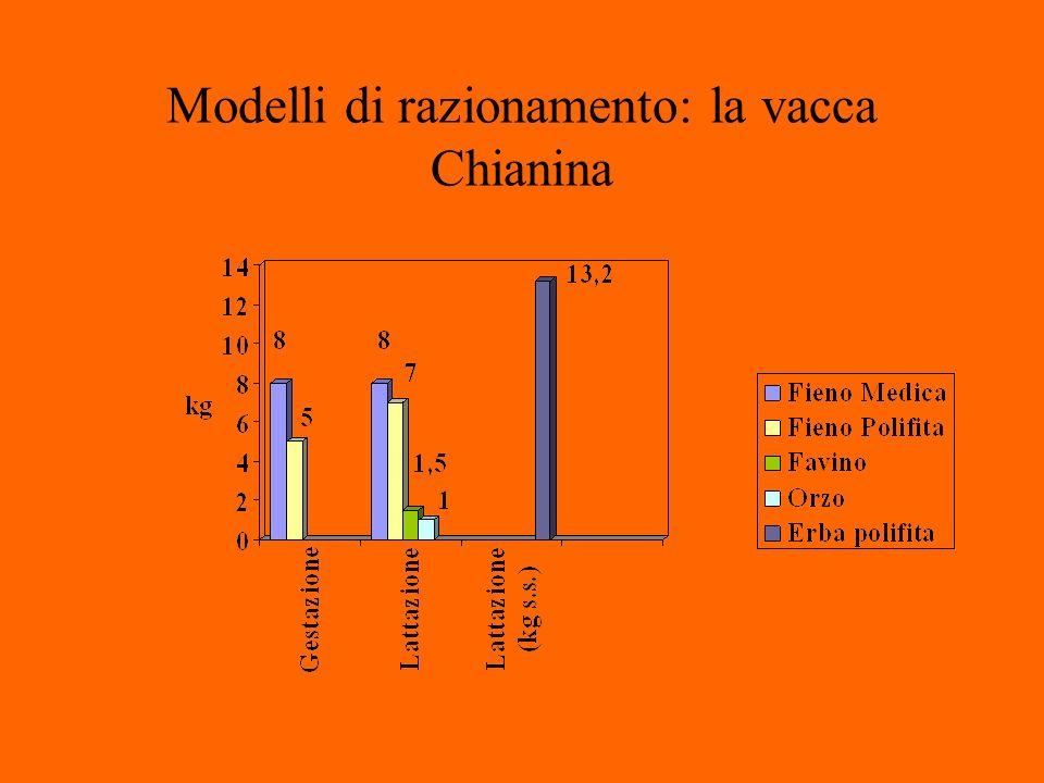 Modelli di razionamento: la vacca Chianina