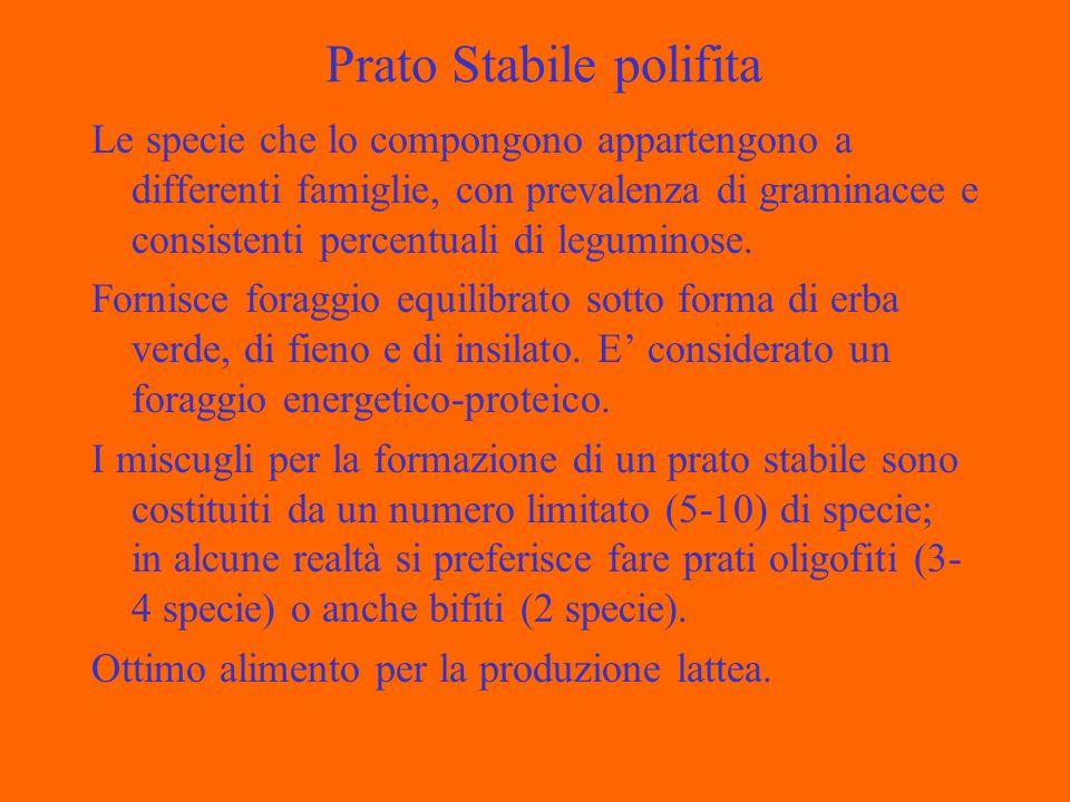 Prato Stabile polifita Le specie che lo compongono appartengono a differenti famiglie, con prevalenza di graminacee e consistenti percentuali di leguminose.