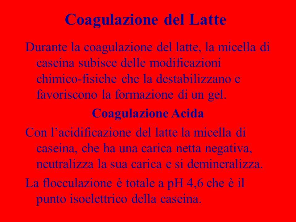Coagulazione del Latte Durante la coagulazione del latte, la micella di caseina subisce delle modificazioni chimico-fisiche che la destabilizzano e fa