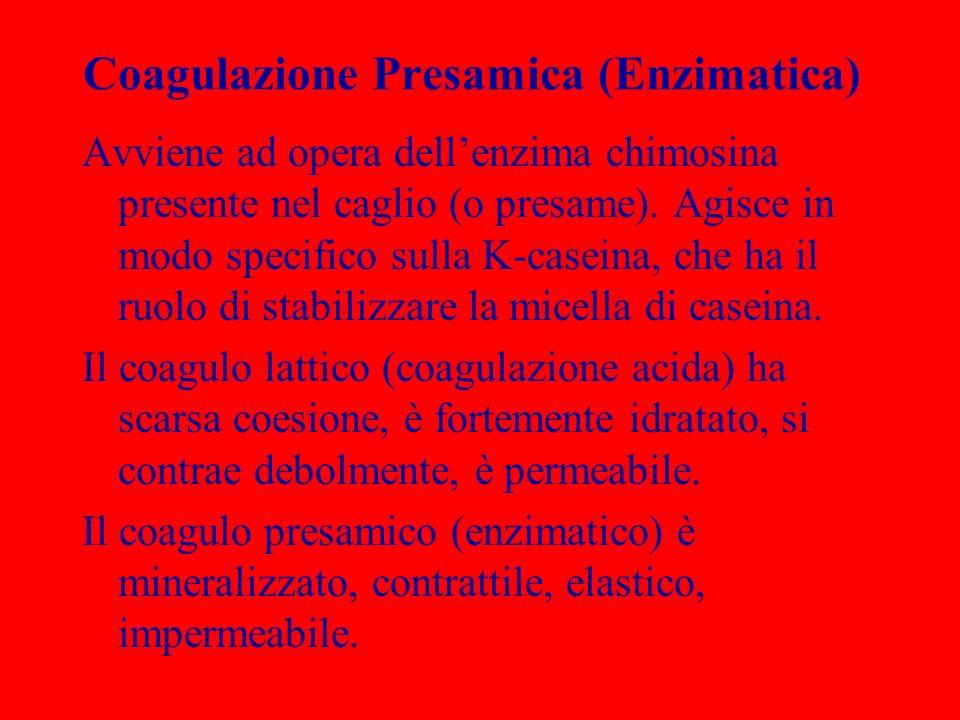 Coagulazione Presamica (Enzimatica) Avviene ad opera dellenzima chimosina presente nel caglio (o presame). Agisce in modo specifico sulla K-caseina, c