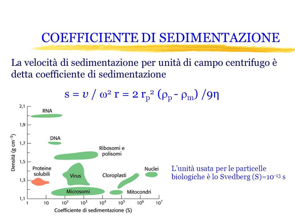 COEFFICIENTE DI SEDIMENTAZIONE La velocità di sedimentazione per unità di campo centrifugo è detta coefficiente di sedimentazione s = v / 2 r = 2 r p