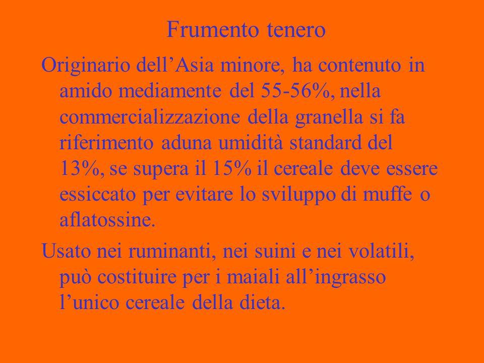 Frumento tenero Originario dellAsia minore, ha contenuto in amido mediamente del 55-56%, nella commercializzazione della granella si fa riferimento ad