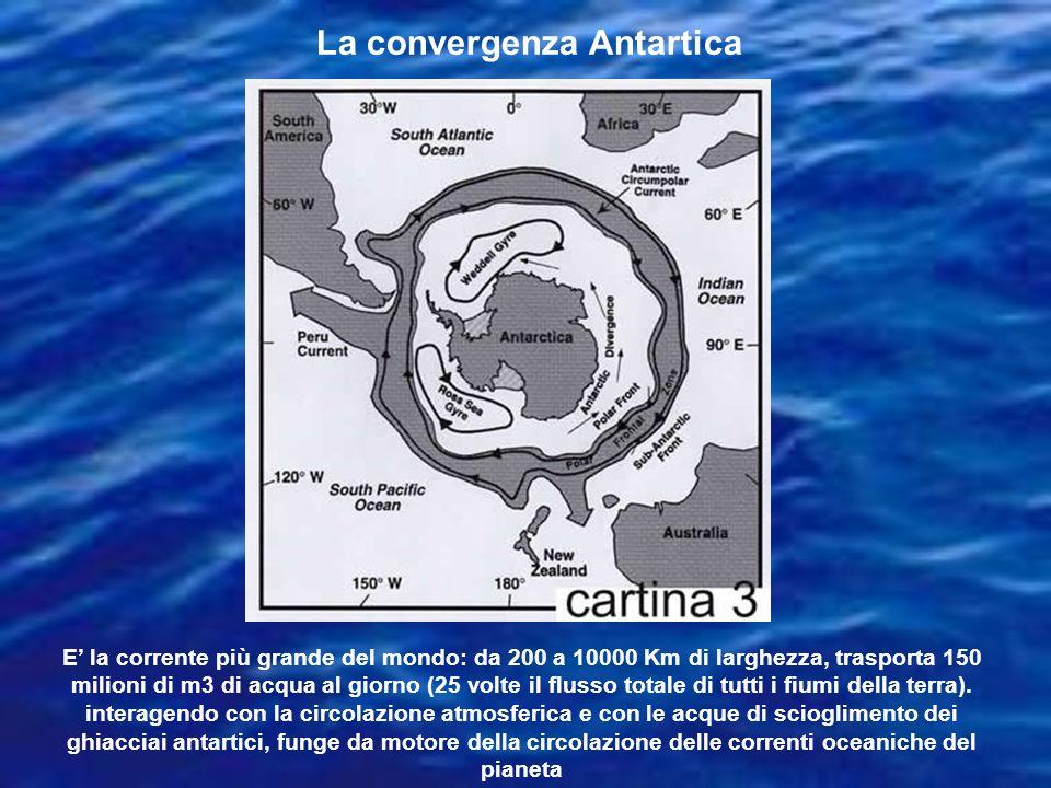 La convergenza Antartica E la corrente più grande del mondo: da 200 a 10000 Km di larghezza, trasporta 150 milioni di m3 di acqua al giorno (25 volte il flusso totale di tutti i fiumi della terra).