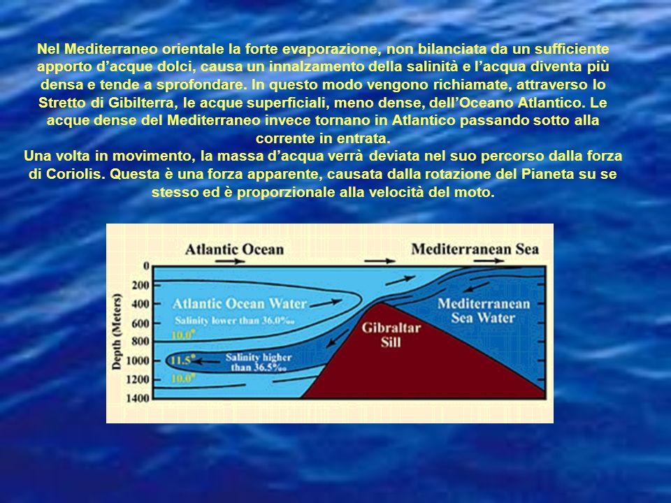 Nel Mediterraneo orientale la forte evaporazione, non bilanciata da un sufficiente apporto dacque dolci, causa un innalzamento della salinità e lacqua diventa più densa e tende a sprofondare.