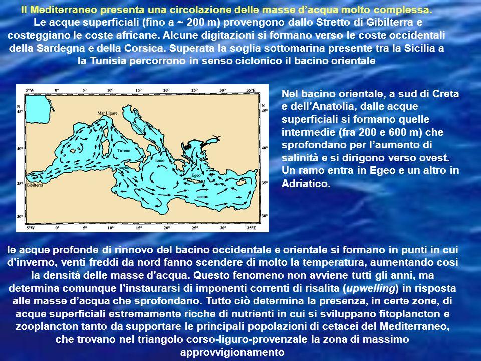 Il Mediterraneo presenta una circolazione delle masse dacqua molto complessa. Le acque superficiali (fino a ~ 200 m) provengono dallo Stretto di Gibil