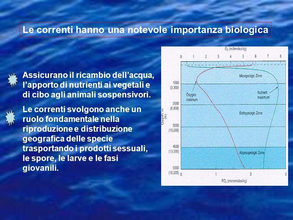 Le correnti hanno una notevole importanza biologica Assicurano il ricambio dellacqua, lapporto di nutrienti ai vegetali e di cibo agli animali sospens