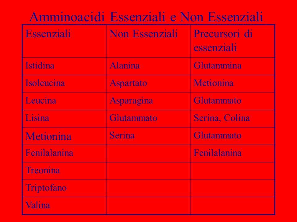 Amminoacidi Essenziali e Non Essenziali EssenzialiNon EssenzialiPrecursori di essenziali IstidinaAlaninaGlutammina IsoleucinaAspartatoMetionina Leucin