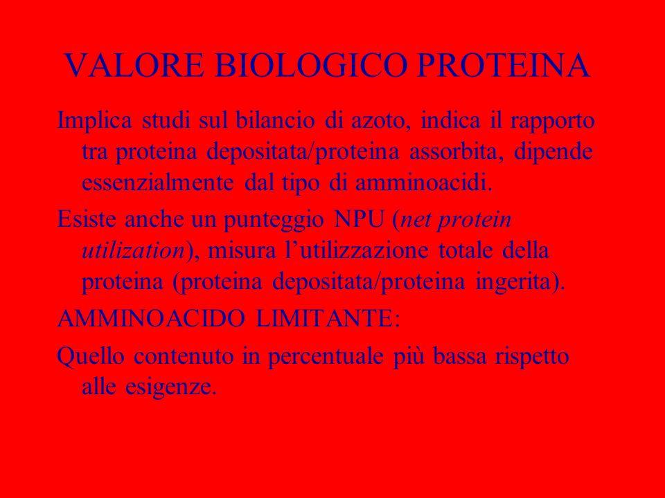 VALORE BIOLOGICO PROTEINA Implica studi sul bilancio di azoto, indica il rapporto tra proteina depositata/proteina assorbita, dipende essenzialmente d