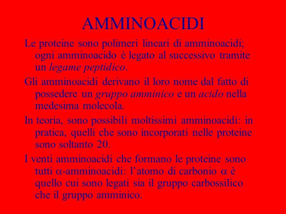 AMMINOACIDI Le proteine sono polimeri lineari di amminoacidi; ogni amminoacido è legato al successivo tramite un legame peptidico. Gli amminoacidi der