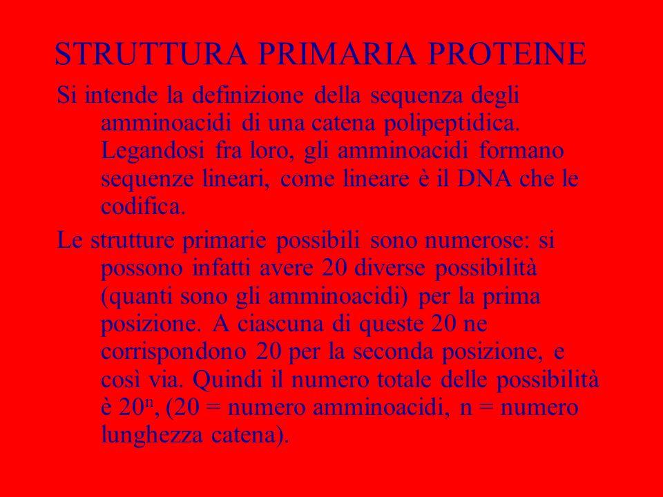 STRUTTURA PRIMARIA PROTEINE Si intende la definizione della sequenza degli amminoacidi di una catena polipeptidica. Legandosi fra loro, gli amminoacid