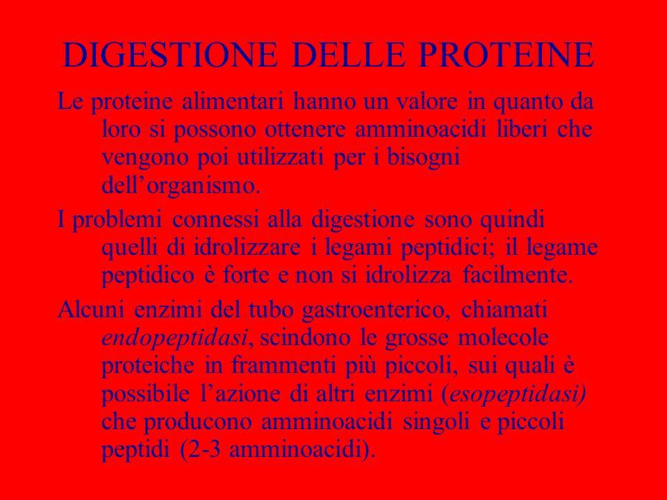 DIGESTIONE DELLE PROTEINE Le proteine alimentari hanno un valore in quanto da loro si possono ottenere amminoacidi liberi che vengono poi utilizzati p