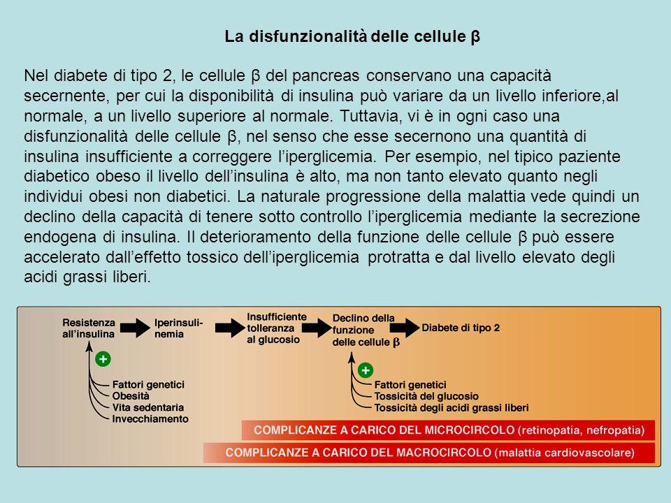La disfunzionalità delle cellule β Nel diabete di tipo 2, le cellule β del pancreas conservano una capacità secernente, per cui la disponibilità di in