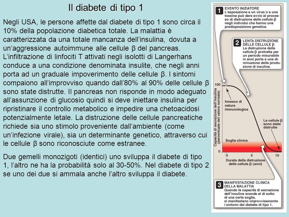 Il diabete di tipo 1 Negli USA, le persone affette dal diabete di tipo 1 sono circa il 10% della popolazione diabetica totale. La malattia è caratteri