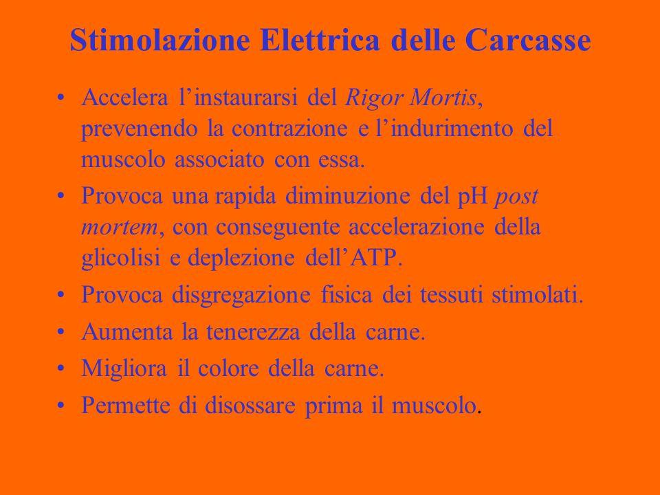 Stimolazione Elettrica delle Carcasse Accelera linstaurarsi del Rigor Mortis, prevenendo la contrazione e lindurimento del muscolo associato con essa.