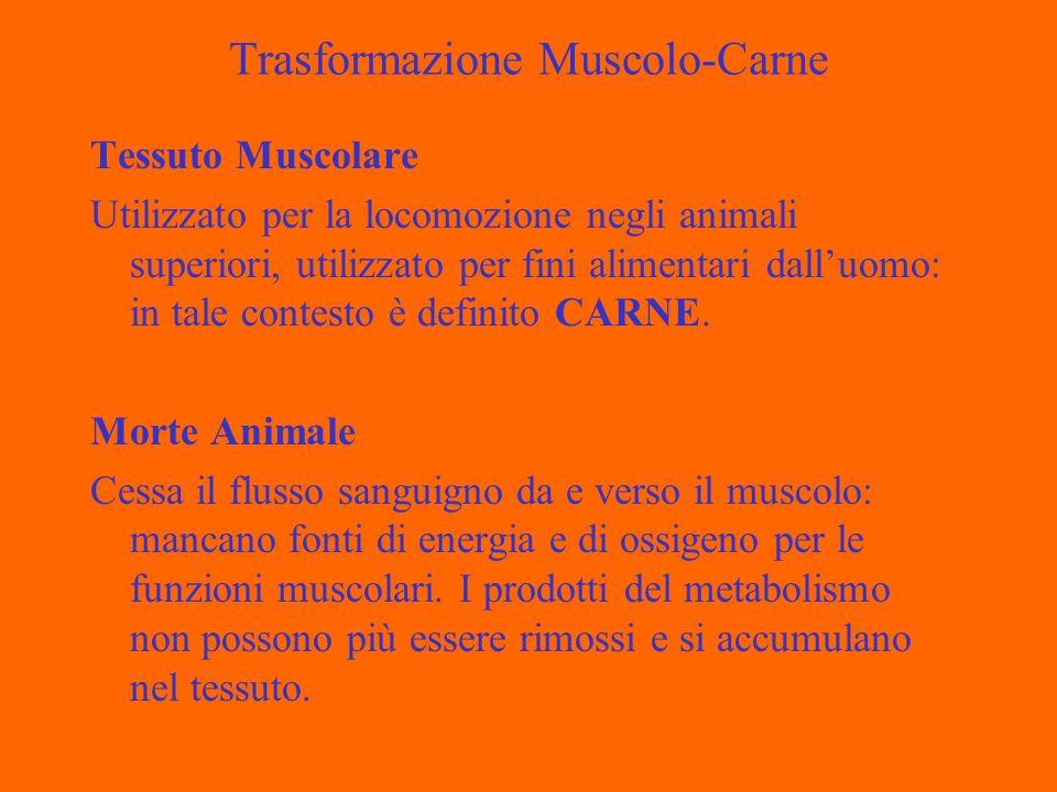 Trasformazione Muscolo-Carne Tessuto Muscolare Utilizzato per la locomozione negli animali superiori, utilizzato per fini alimentari dalluomo: in tale contesto è definito CARNE.