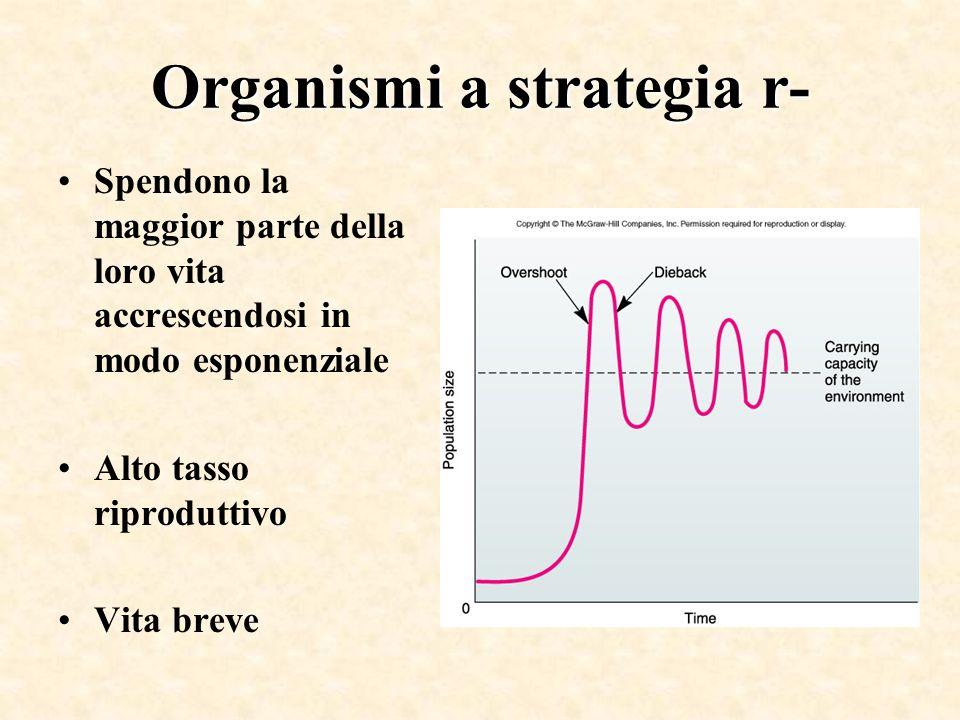 Organismi a strategia r- Spendono la maggior parte della loro vita accrescendosi in modo esponenziale Alto tasso riproduttivo Vita breve