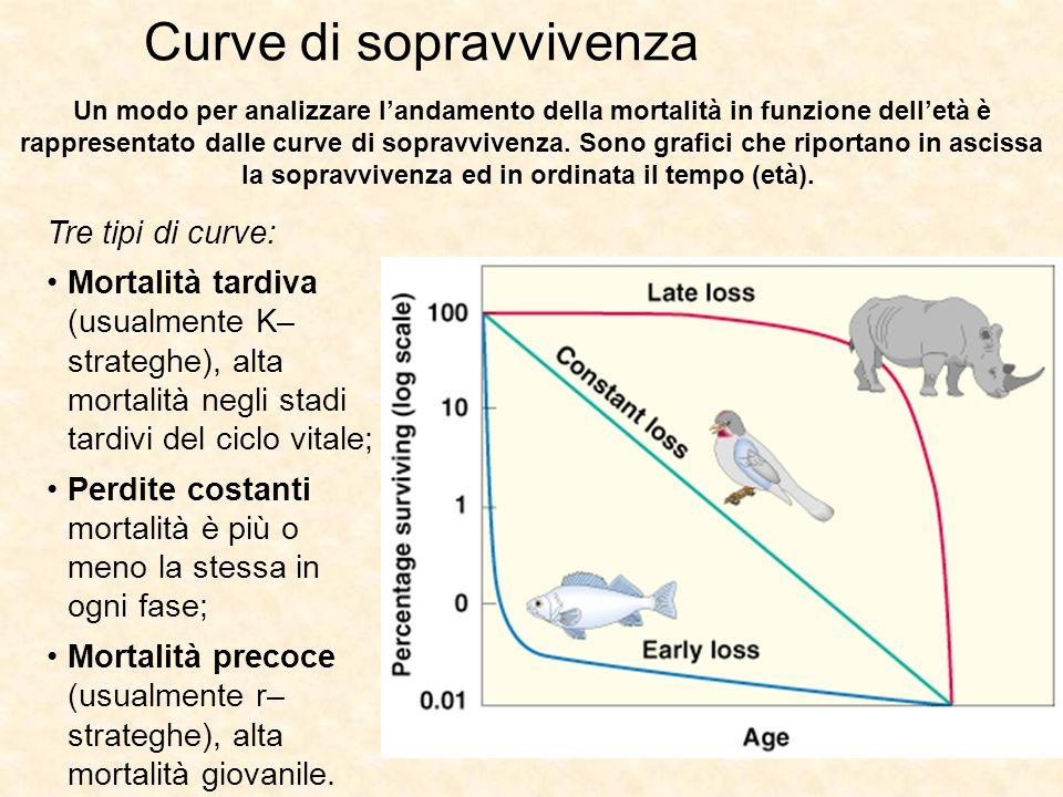 Curve di sopravvivenza Tre tipi di curve: Mortalità tardiva (usualmente K– strateghe), alta mortalità negli stadi tardivi del ciclo vitale; Perdite co