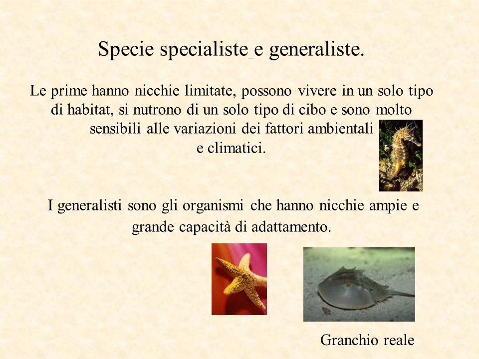 Specie specialiste e generaliste. Le prime hanno nicchie limitate, possono vivere in un solo tipo di habitat, si nutrono di un solo tipo di cibo e son