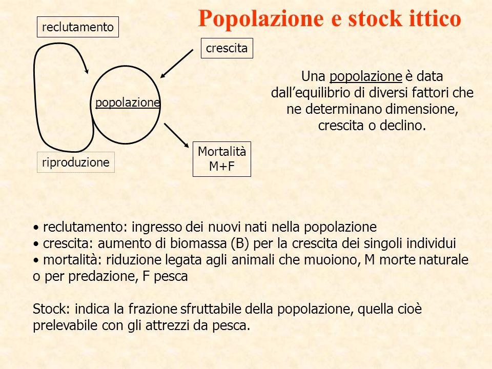 popolazione crescita Mortalità M+F riproduzione reclutamento Una popolazione è data dallequilibrio di diversi fattori che ne determinano dimensione, c