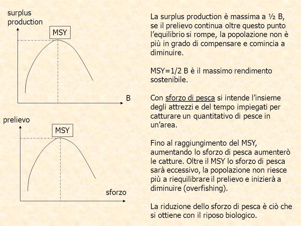 MSY surplus production B prelievo sforzo La surplus production è massima a ½ B, se il prelievo continua oltre questo punto lequilibrio si rompe, la po