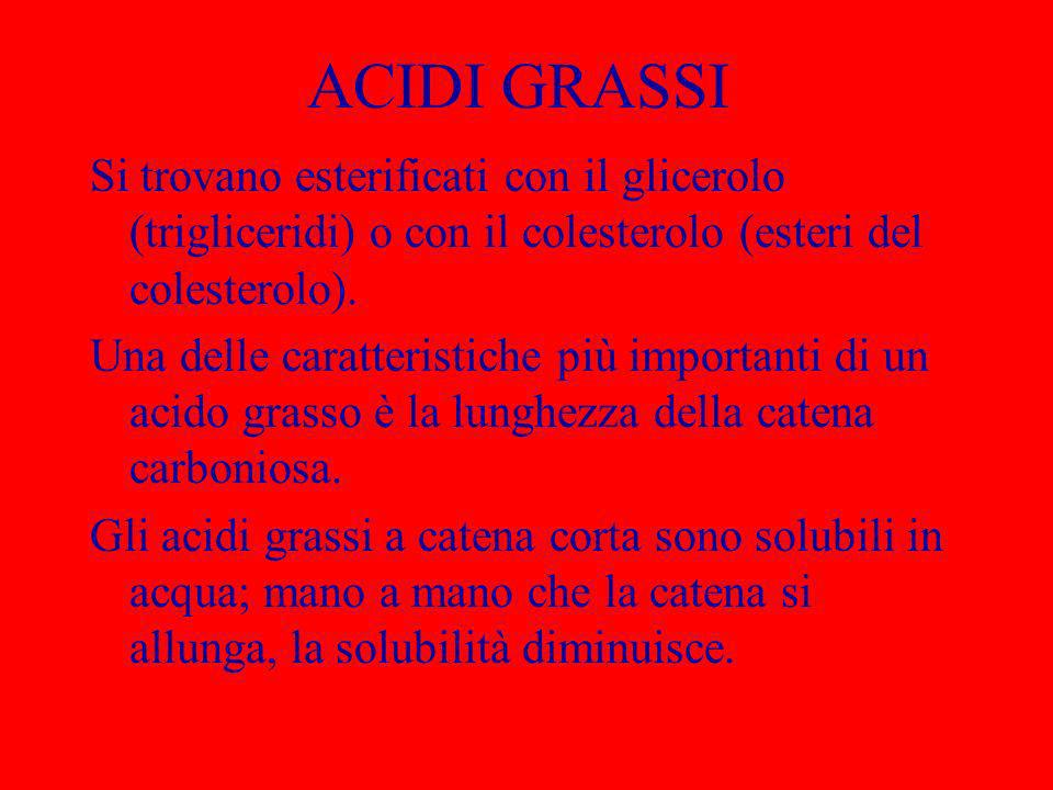 ACIDI GRASSI Si trovano esterificati con il glicerolo (trigliceridi) o con il colesterolo (esteri del colesterolo). Una delle caratteristiche più impo