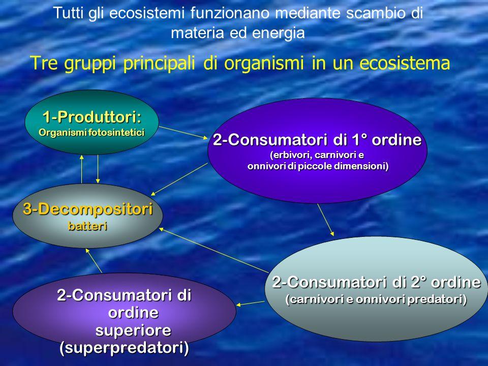 Tre gruppi principali di organismi in un ecosistema 1-Produttori: Organismi fotosintetici 2-Consumatori di 1° ordine (erbivori, carnivori e onnivori di piccole dimensioni) onnivori di piccole dimensioni) 2-Consumatori di 2° ordine (carnivori e onnivori predatori) 2-Consumatori di ordine superiore (superpredatori) 3-Decompositoribatteri Tutti gli ecosistemi funzionano mediante scambio di materia ed energia