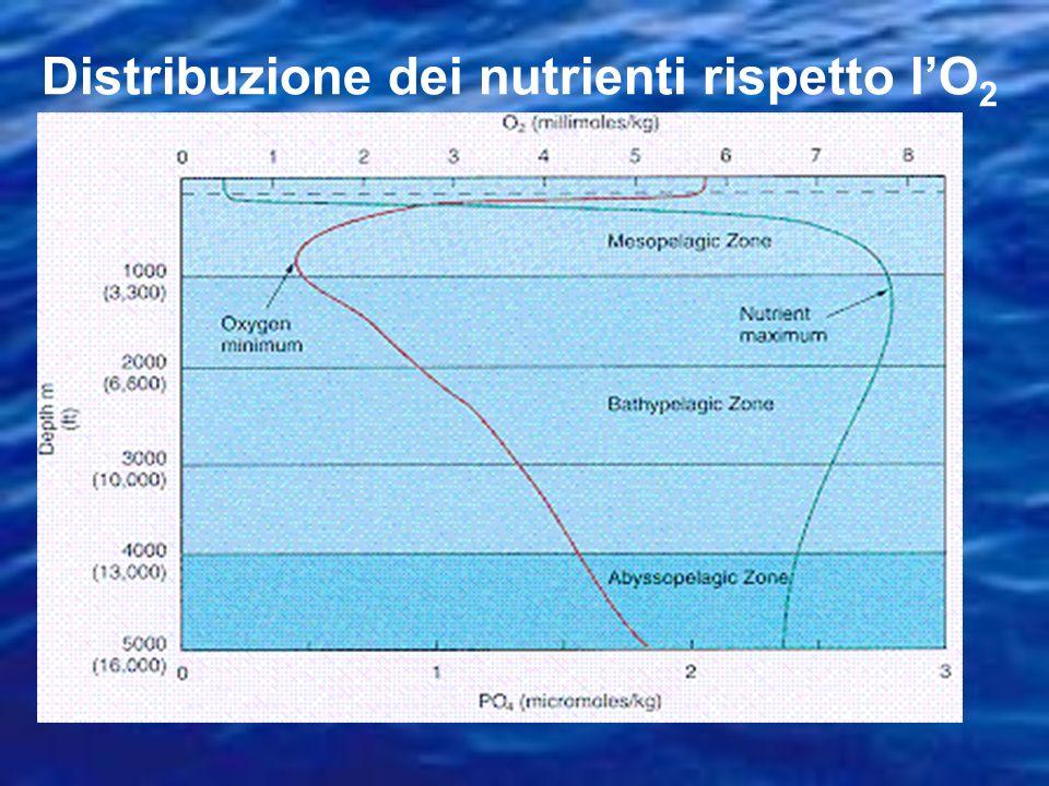 Tramite diffusione attraverso la membrana: le molecole si muovono secondo un gradiente di concentrazione (alto basso) Assorbimento dei nutrienti