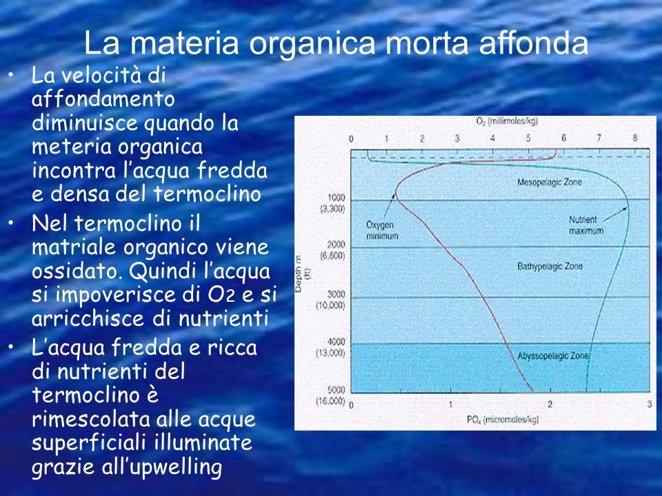 Perché O 2 è elevato alla superficie e nei strati rimescolati #1: Come e dove è prodotto lossigeno nel mare??? 6H 2 O + 6CO 2 + energia + nutrienti =