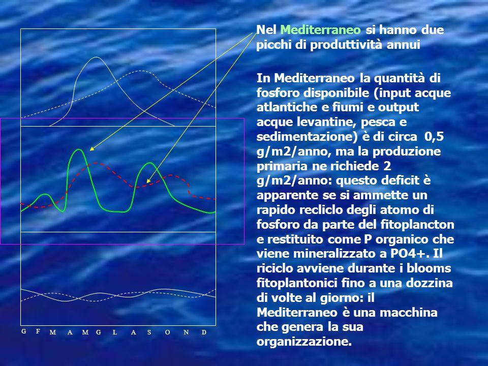 Nelle aree tropicali, data la costanza della temperatura, le acque superficiali rimangono continuamente separate dalle profonde, nitrati e fosfati son