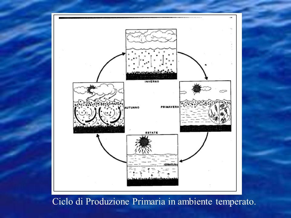 GF ALGMMASOND Nel Mediterraneo si hanno due picchi di produttività annui In Mediterraneo la quantità di fosforo disponibile (input acque atlantiche e