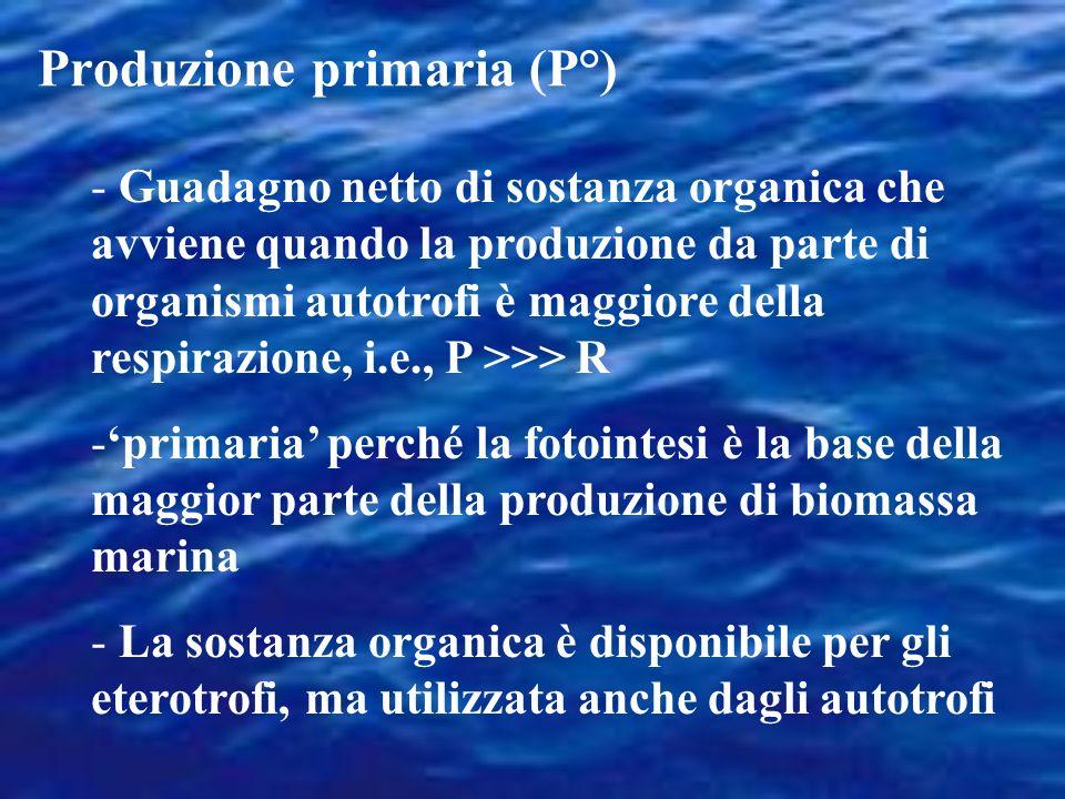 Produzione primaria (P°) - Guadagno netto di sostanza organica che avviene quando la produzione da parte di organismi autotrofi è maggiore della respirazione, i.e., P >>> R -primaria perché la fotointesi è la base della maggior parte della produzione di biomassa marina - La sostanza organica è disponibile per gli eterotrofi, ma utilizzata anche dagli autotrofi