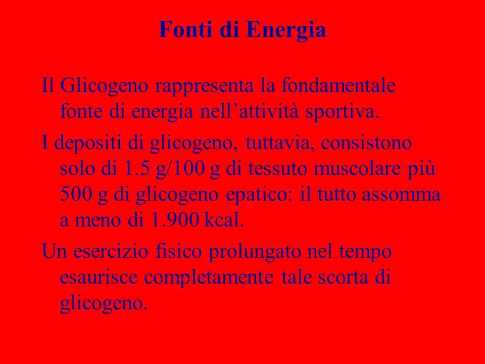 Fonti di Energia Il Glicogeno rappresenta la fondamentale fonte di energia nellattività sportiva. I depositi di glicogeno, tuttavia, consistono solo d
