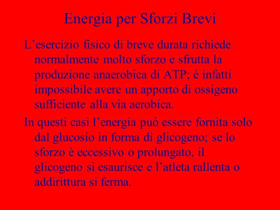 Energia per Sforzi Brevi Lesercizio fisico di breve durata richiede normalmente molto sforzo e sfrutta la produzione anaerobica di ATP; è infatti impo