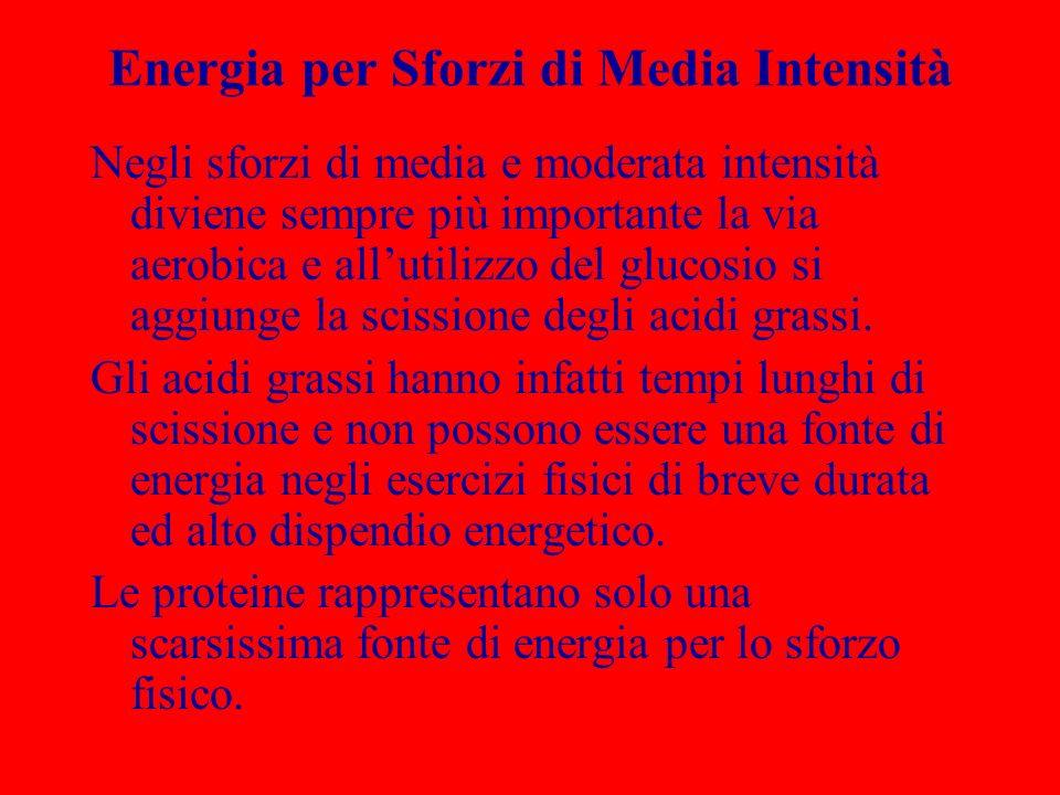 Energia per Sforzi di Media Intensità Negli sforzi di media e moderata intensità diviene sempre più importante la via aerobica e allutilizzo del gluco