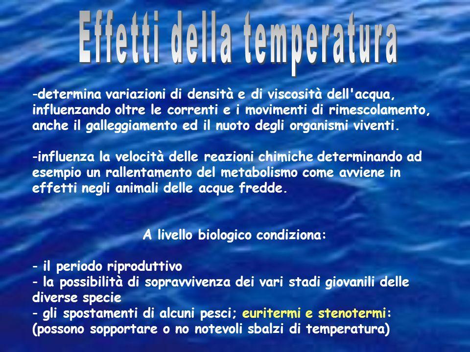 Nel Mediterraneo la temperatura anche a profondità di 4000-5000 metri, non scende al di sotto dei 12-13 °C (OMOTERMIA). lo stretto di Gibilterra forma