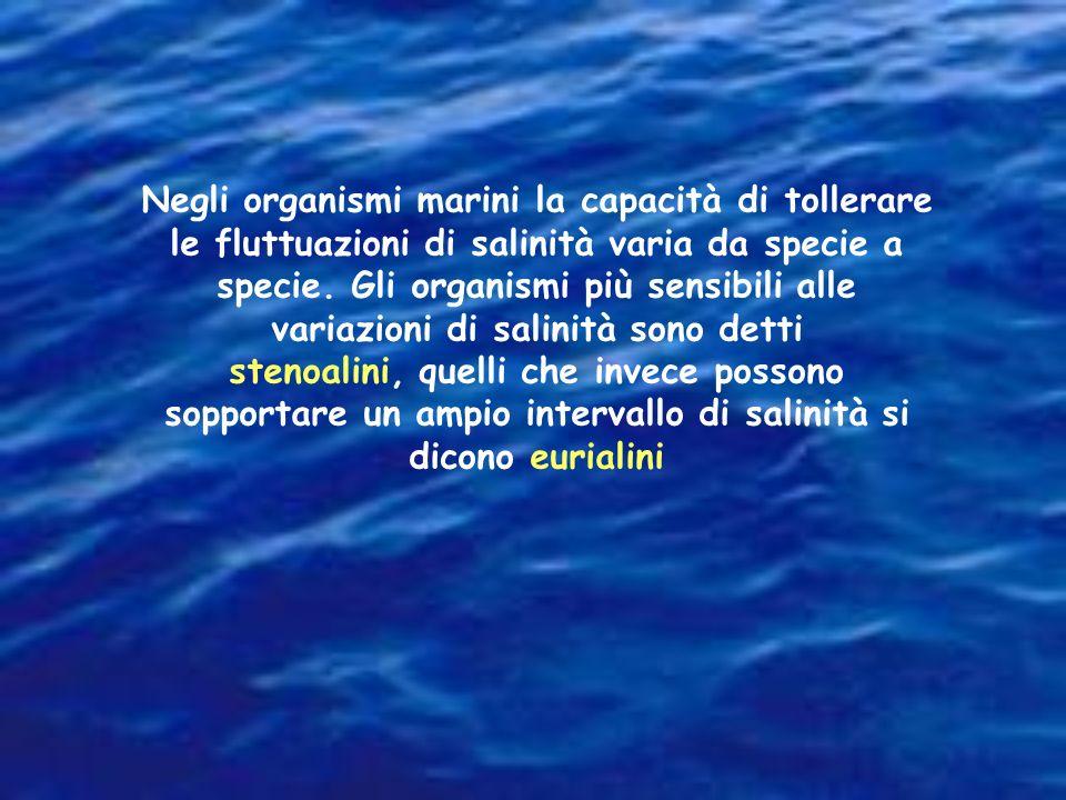 Tra i mari italiani, l'Adriatico, lungo la costa italiana, e soprattutto nella parte settentrionale e centrale, presenta una salinità media del 33 per