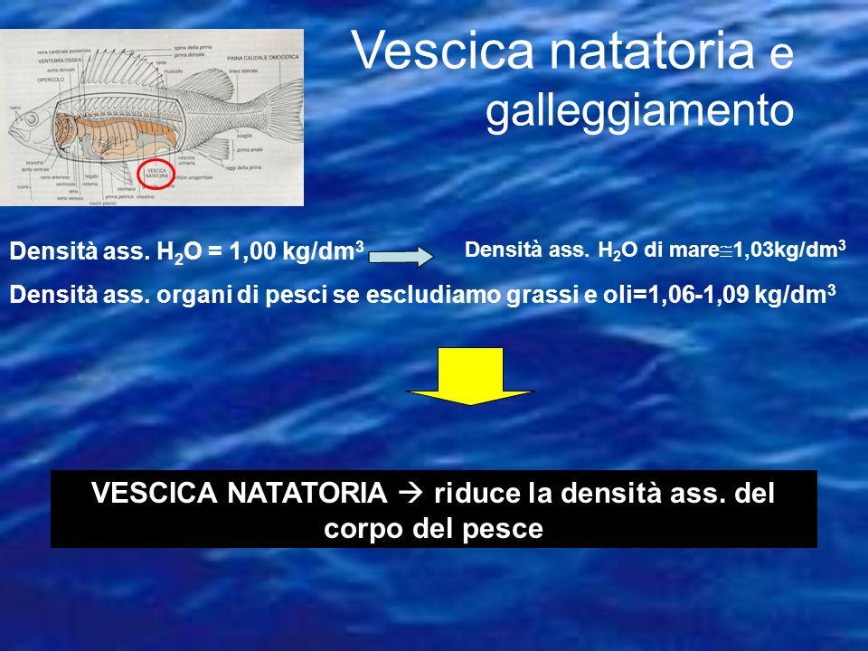 densità 1,008 - 1,030 g/cm3 dipende da salinità, temperatura e pressione salinitàdensitàtemperatura profondità direttamente proporzionale inversamente
