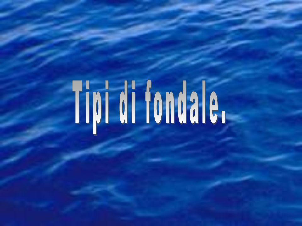 Vescica natatoria e galleggiamento Densità ass. H 2 O = 1,00 kg/dm 3 Densità ass. organi di pesci se escludiamo grassi e oli=1,06-1,09 kg/dm 3 Densità