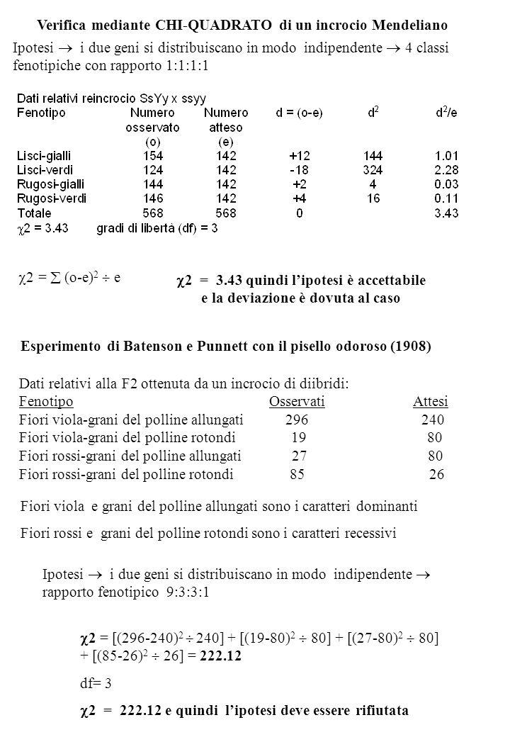 Verifica mediante CHI-QUADRATO di un incrocio Mendeliano Ipotesi i due geni si distribuiscano in modo indipendente 4 classi fenotipiche con rapporto 1:1:1:1 2 = (o-e) 2 e 2 = [(296-240) 2 240] + [(19-80) 2 80] + [(27-80) 2 80] + [(85-26) 2 26] = 222.12 df= 3 Ipotesi i due geni si distribuiscano in modo indipendente rapporto fenotipico 9:3:3:1 2 = 3.43 quindi lipotesi è accettabile e la deviazione è dovuta al caso Esperimento di Batenson e Punnett con il pisello odoroso (1908) Fiori viola e grani del polline allungati sono i caratteri dominanti Fiori rossi e grani del polline rotondi sono i caratteri recessivi 2 = 222.12 e quindi lipotesi deve essere rifiutata Dati relativi alla F2 ottenuta da un incrocio di diibridi: Fenotipo Osservati Attesi Fiori viola-grani del polline allungati 296 240 Fiori viola-grani del polline rotondi 19 80 Fiori rossi-grani del polline allungati 27 80 Fiori rossi-grani del polline rotondi 85 26