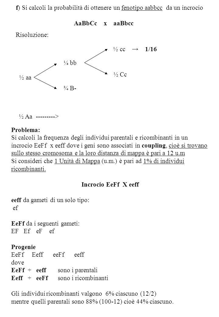 Problema: Si calcoli la frequenza degli individui parentali e ricombinanti in un incrocio EeFf x eeff dove i geni sono associati in coupling, cioè si trovano sullo stesso cromosoma e la loro distanza di mappa è pari a 12 u.m Si consideri che 1 Unità di Mappa (u.m.) è pari ad 1% di individui ricombinanti.