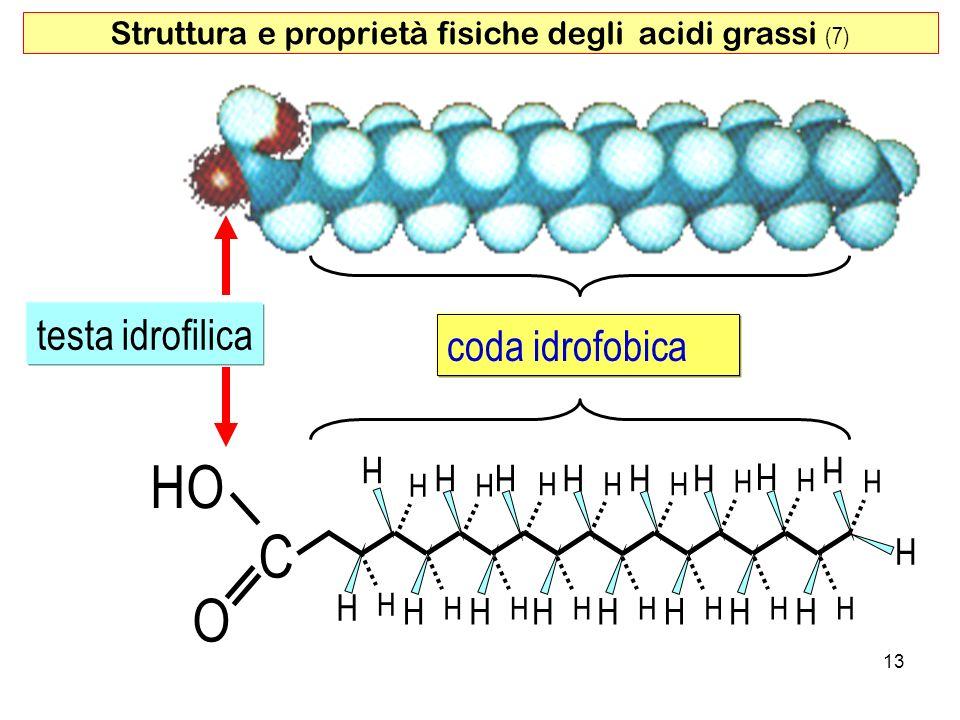 O HO C H H H H H H H H H H H H H H H H H H H H H H H H H H H H H H H H H coda idrofobica testa idrofilica 13 Struttura e proprietà fisiche degli acidi grassi (7)