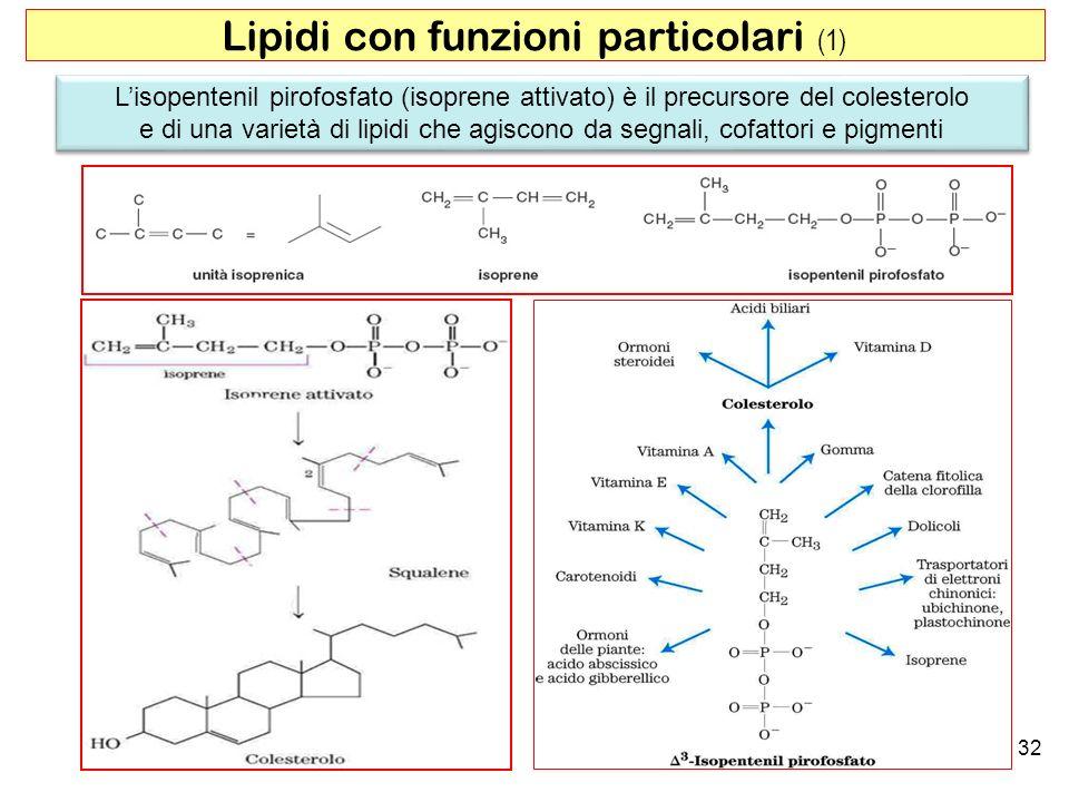 32 Lipidi con funzioni particolari (1) Lisopentenil pirofosfato (isoprene attivato) è il precursore del colesterolo e di una varietà di lipidi che agiscono da segnali, cofattori e pigmenti Lisopentenil pirofosfato (isoprene attivato) è il precursore del colesterolo e di una varietà di lipidi che agiscono da segnali, cofattori e pigmenti