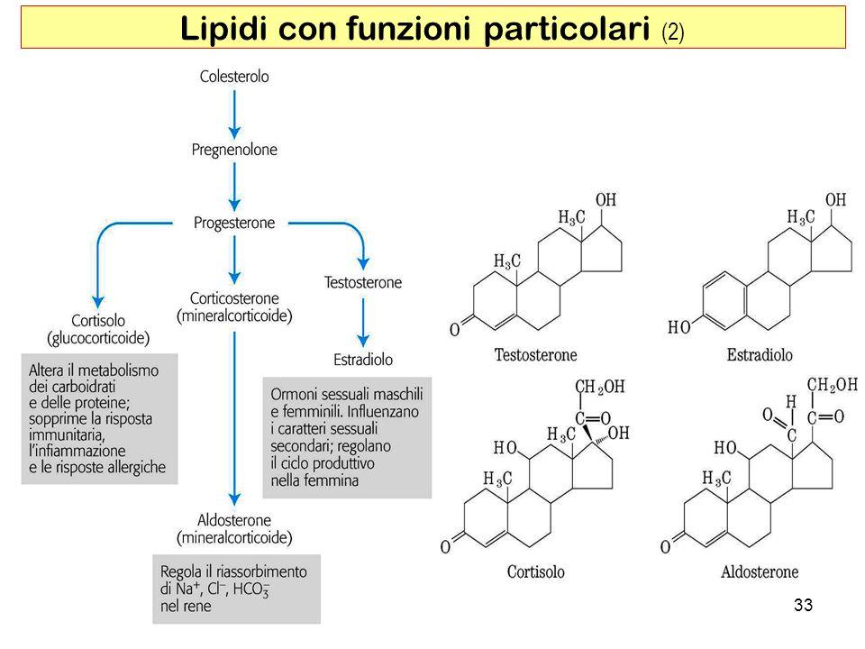 33 Lipidi con funzioni particolari (2)