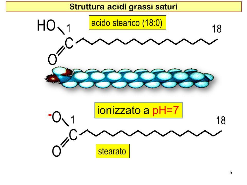 acido stearico (18:0) O HO C 1 18 5 Struttura acidi grassi saturi O -O-O C 1 18 stearato ionizzato a pH=7