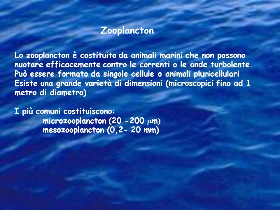 Zooplancton Lo zooplancton è costituito da animali marini che non possono nuotare efficacemente contro le correnti o le onde turbolente. Può essere fo