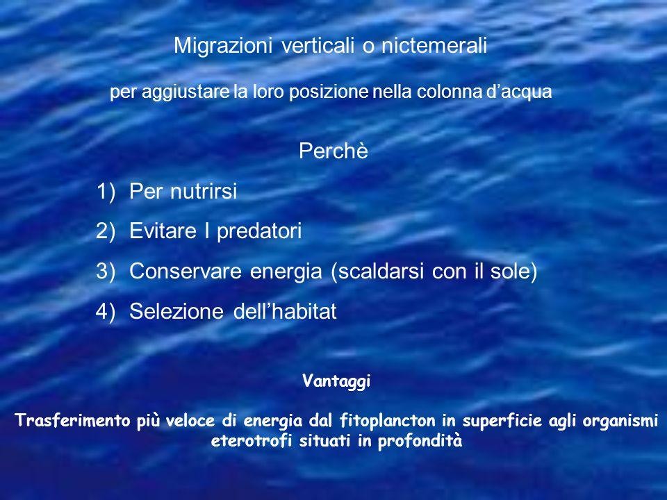 Migrazioni verticali o nictemerali per aggiustare la loro posizione nella colonna dacqua Perchè 1)Per nutrirsi 2)Evitare I predatori 3)Conservare ener